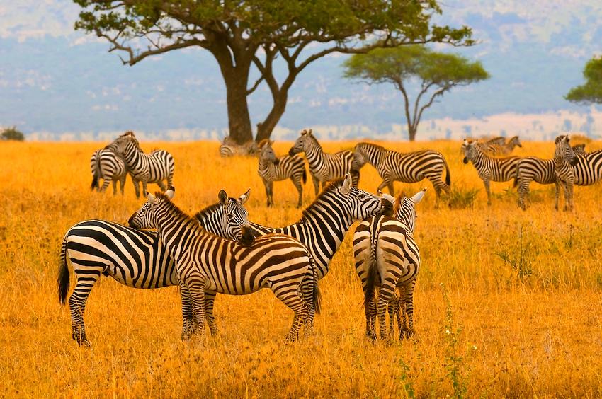 Serengeti National Park-Tanzania